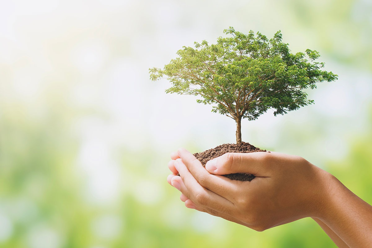 Responsabilidade ambiental e social Bicachair